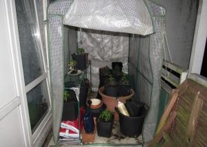 Die kleine Marihuana-Plantage auf dem Balkon. Foto: Polizei