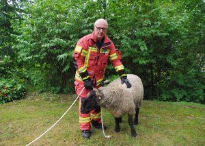 Das Schaf wurde nach seiner Rettung von der Feuerwehr betreut. Foto: Feuerwehr Velbert